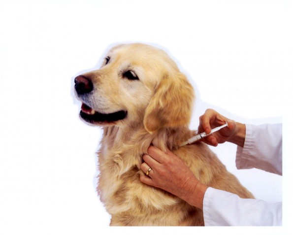 dog_being_vaccinated[1]