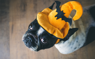 image for Halloween Safety and Your Pet